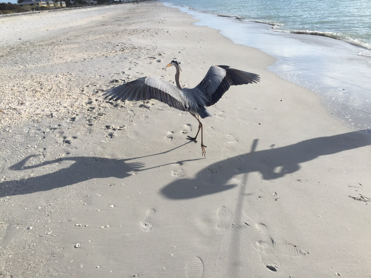 Boca Grande Beach 15 Minuten entfernt